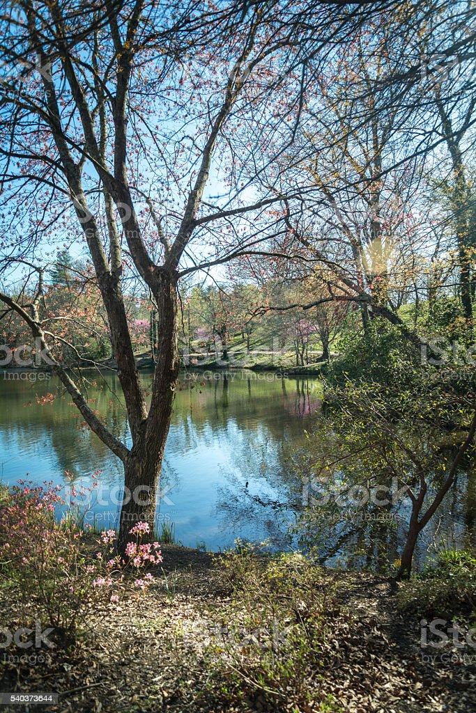 Springtime around the pond stock photo