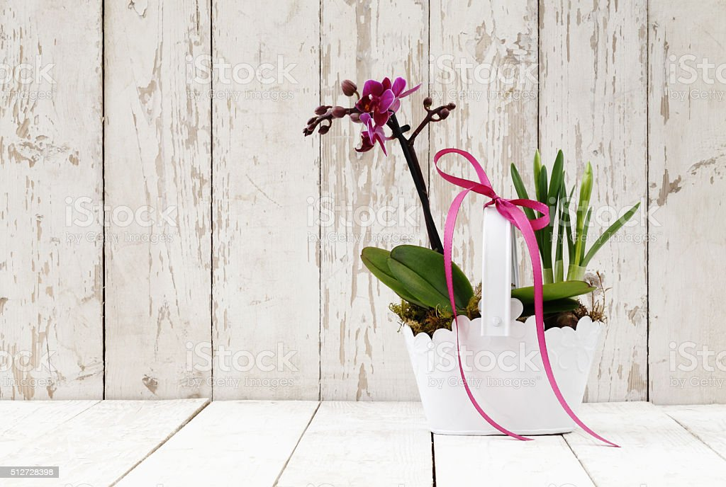 springtime, crocus and orchid flowers in basket on wooden white stock photo