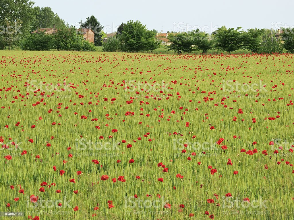 Springtime field royalty-free stock photo