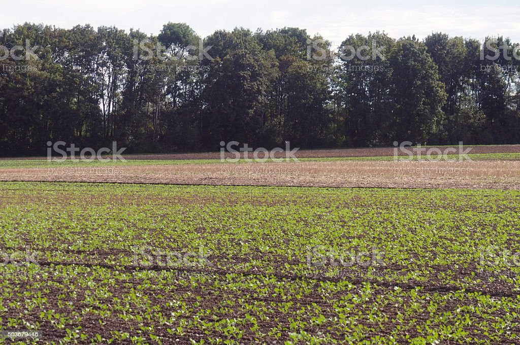 Springtime Field stock photo