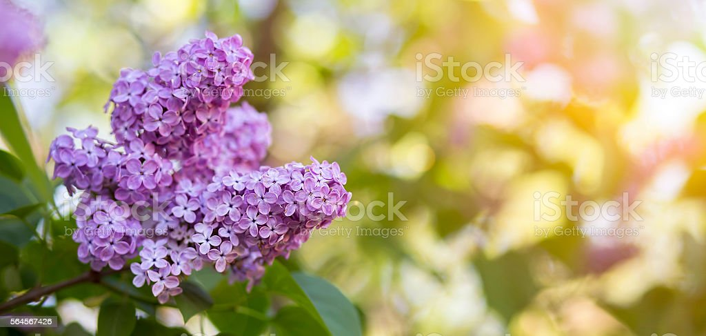 Springtime flower banner stock photo