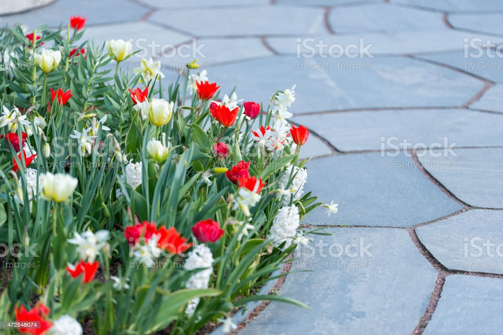 Springtime flowerbed and slates stock photo