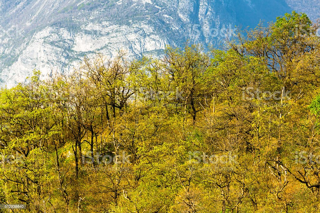 Springtime Forest in Alps stock photo
