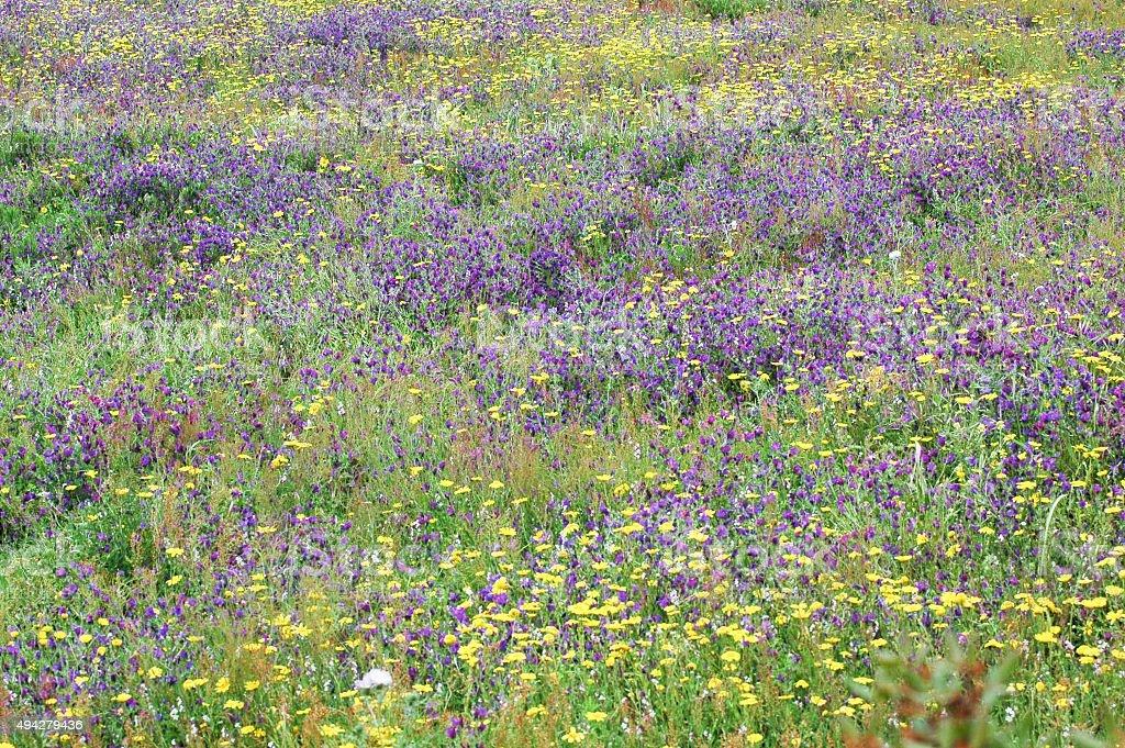 Springtime grass royalty-free stock photo