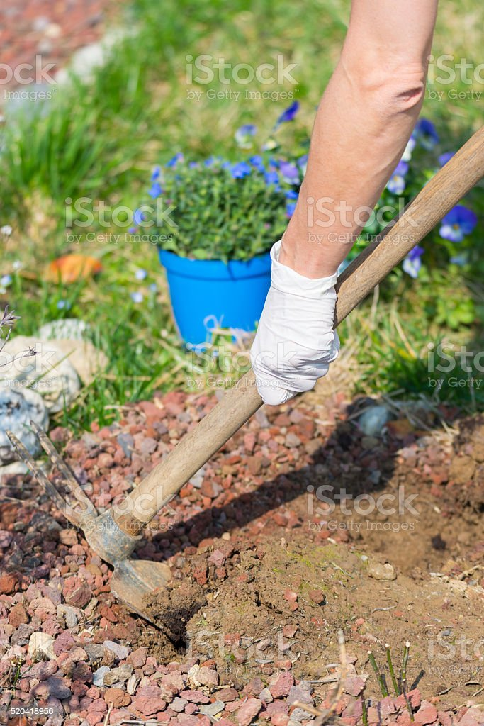Springtime home gardening, hoeing soil and planting flowers stock photo