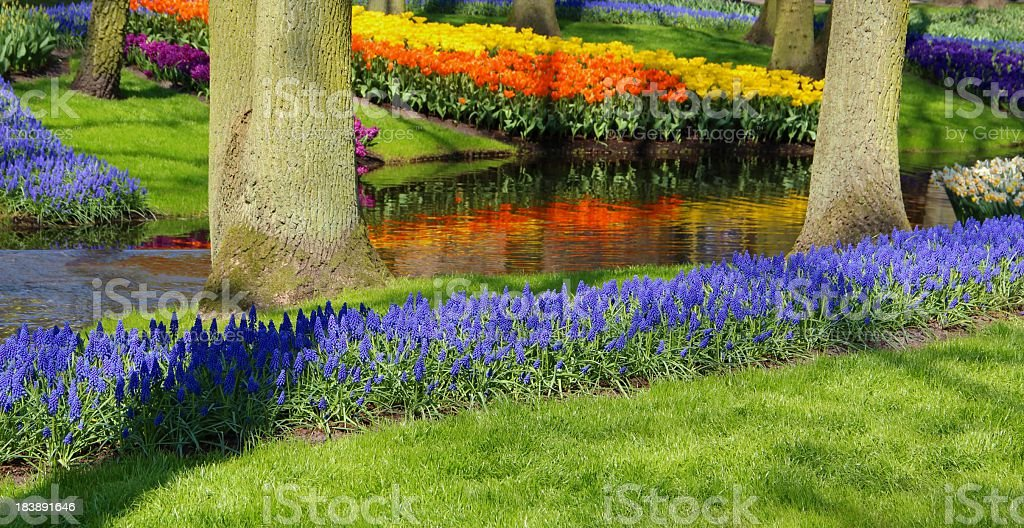 Springtime in a park royalty-free stock photo