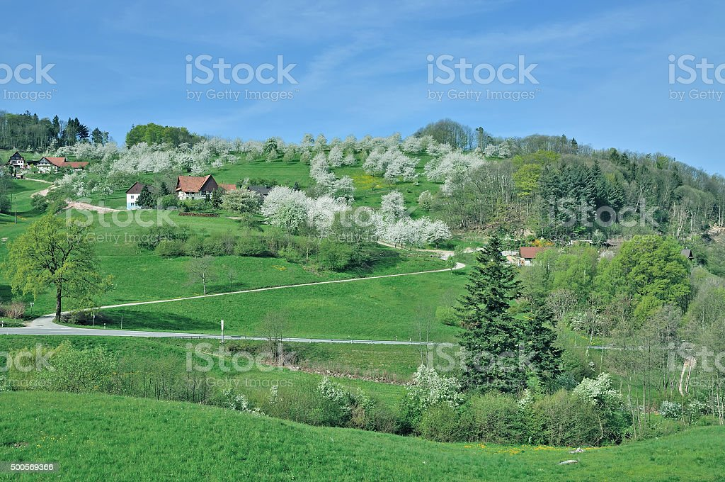 Springtime in Black Forest,Germany stock photo