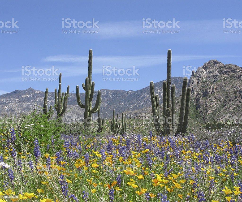 Springtime in the desert stock photo