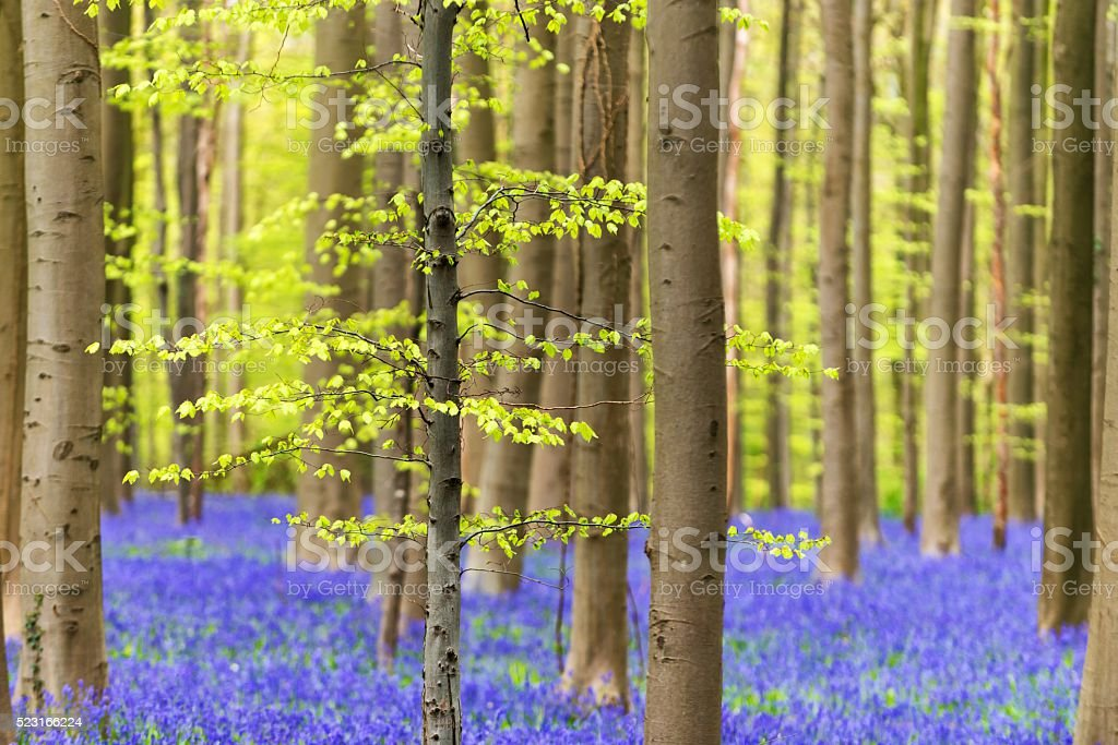 Springtime in the forrest stock photo