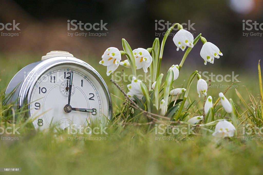 Springtime in the garden stock photo