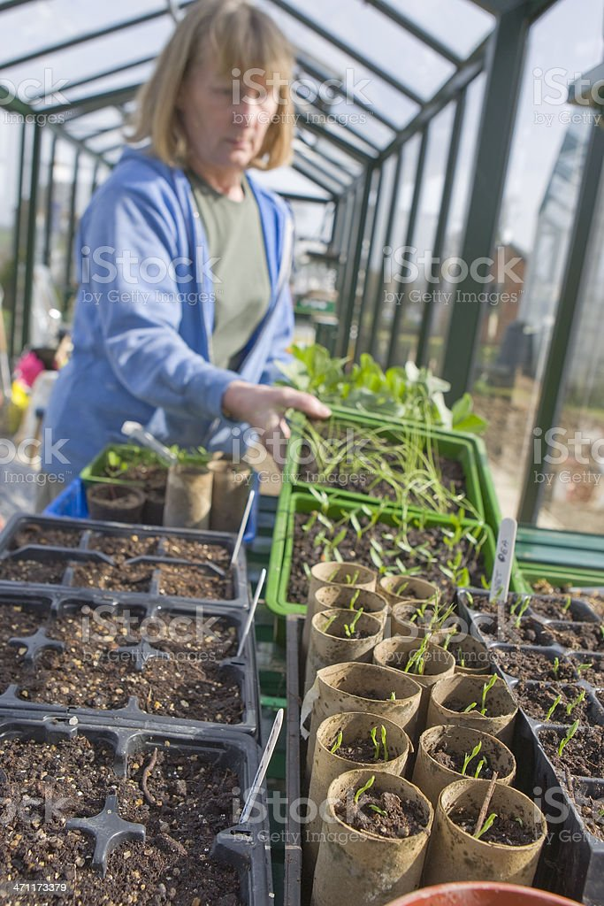 Springtime In The Greenhouse royalty-free stock photo