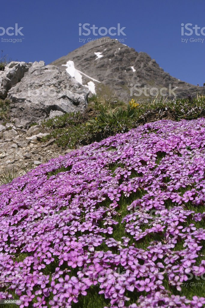 springtime in the mountains royalty-free stock photo
