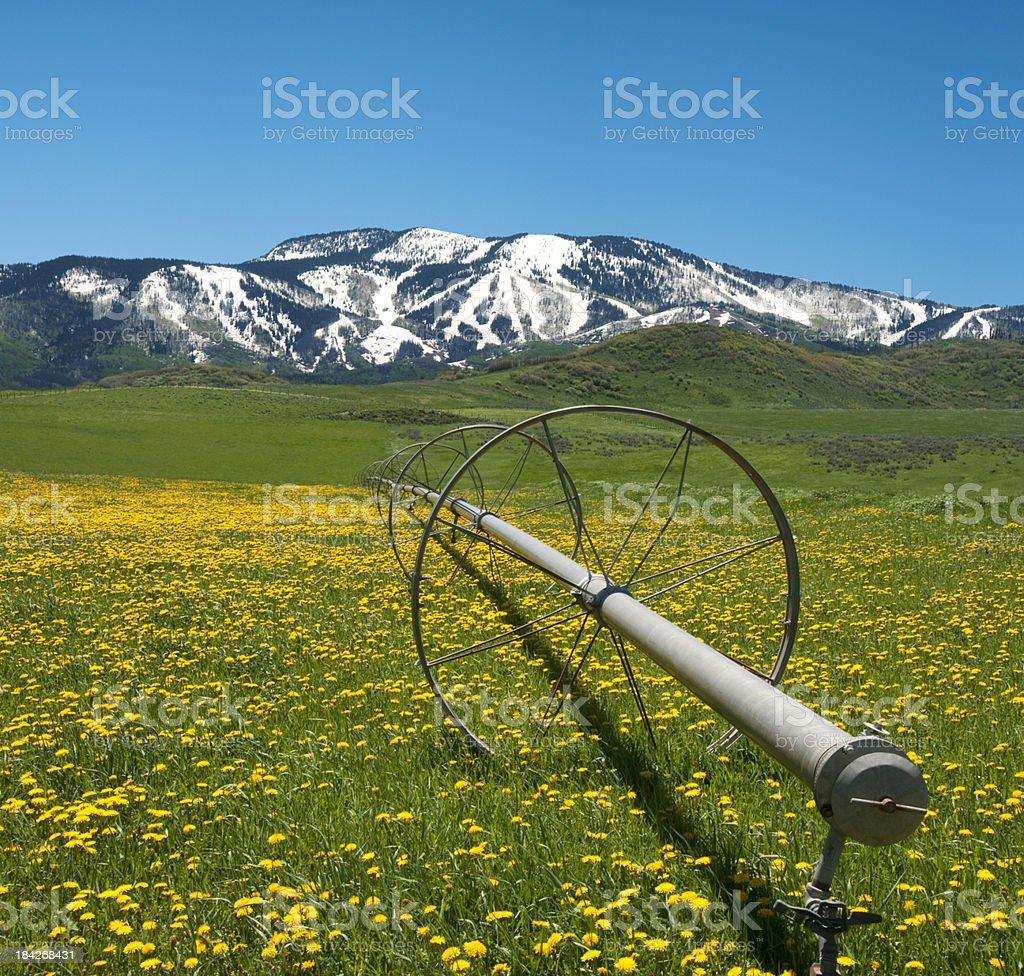 Springtime In The Rockies stock photo