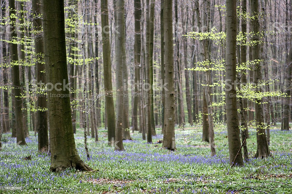 Springtime in the woods royalty-free stock photo