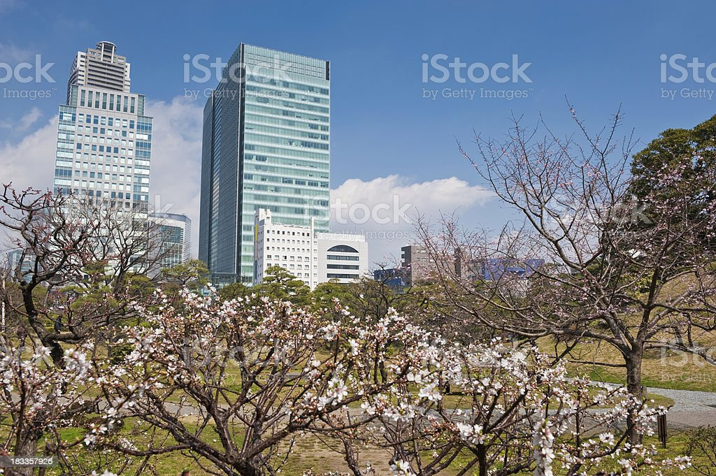 Springtime in Tokyo pink cherry blossom trees downtown skyscrapers Japan stock photo