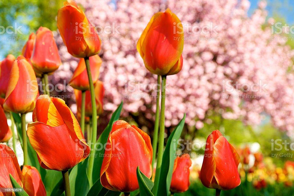 Springtime in Wiesbaden stock photo