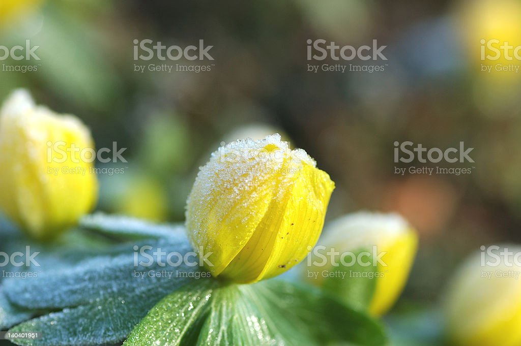 Springtime is coming stock photo
