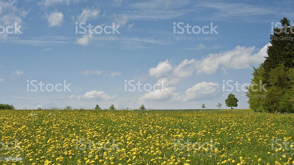Springtime Landscape stock photo