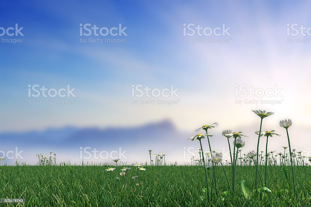 Springtime Meadow With Daisies On Sky Abstract Background stock photo