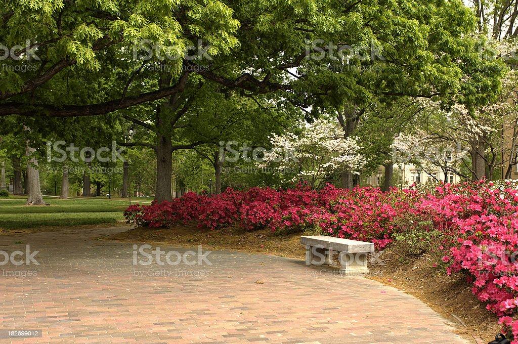 Springtime on Campus stock photo