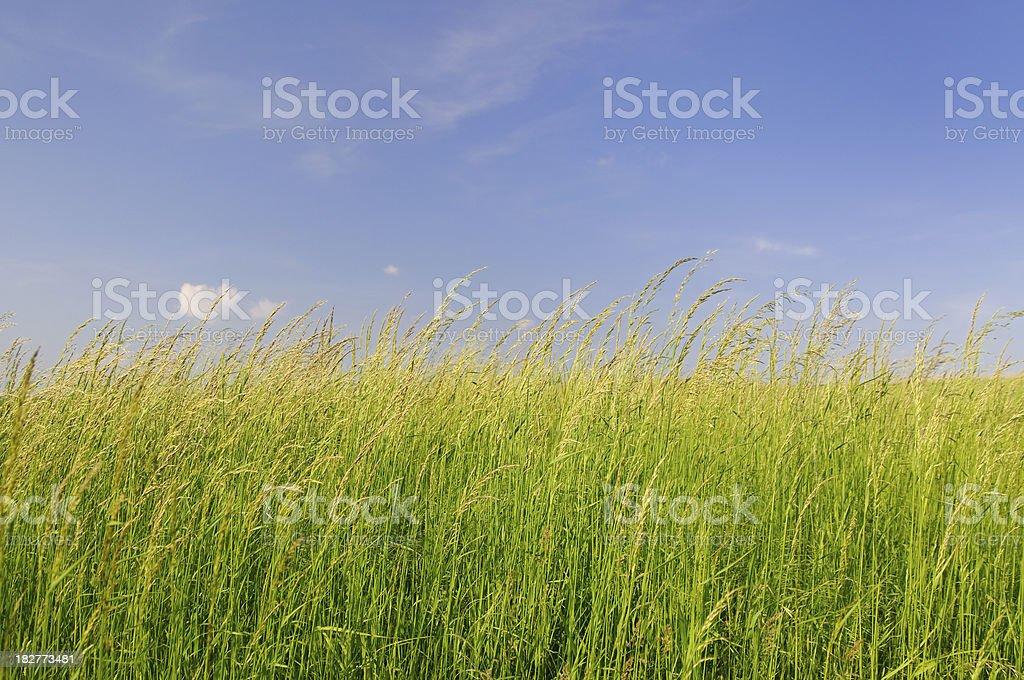 Springtime royalty-free stock photo