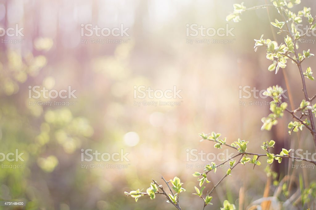 Springtime stock photo