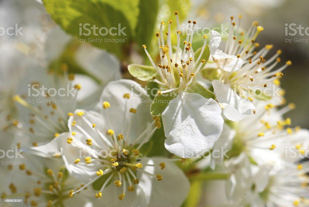 La primavera foto de stock libre de derechos