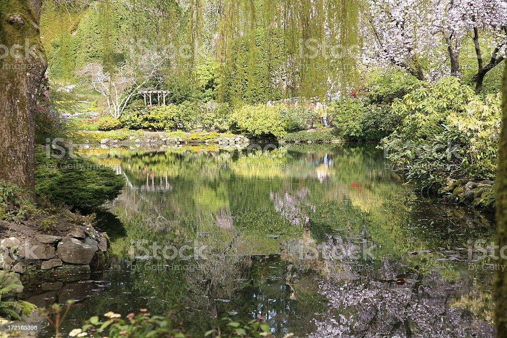 Springtime Reflections At Butchart Gardens. royalty-free stock photo