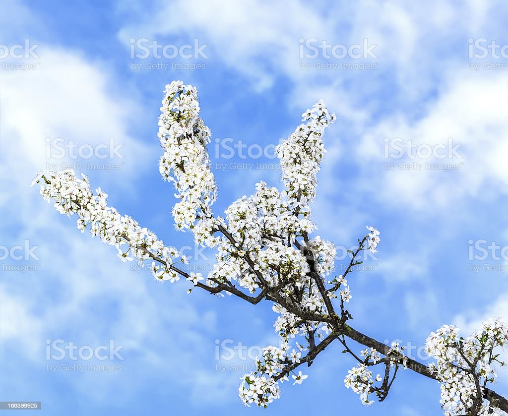 Springtime tree royalty-free stock photo