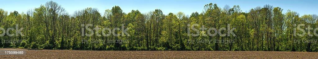Springtime Treeline Panorama stock photo