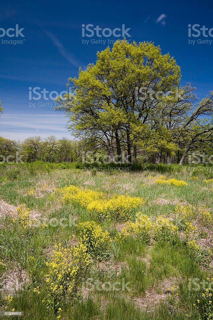 Springtime Trees and Flowers stock photo