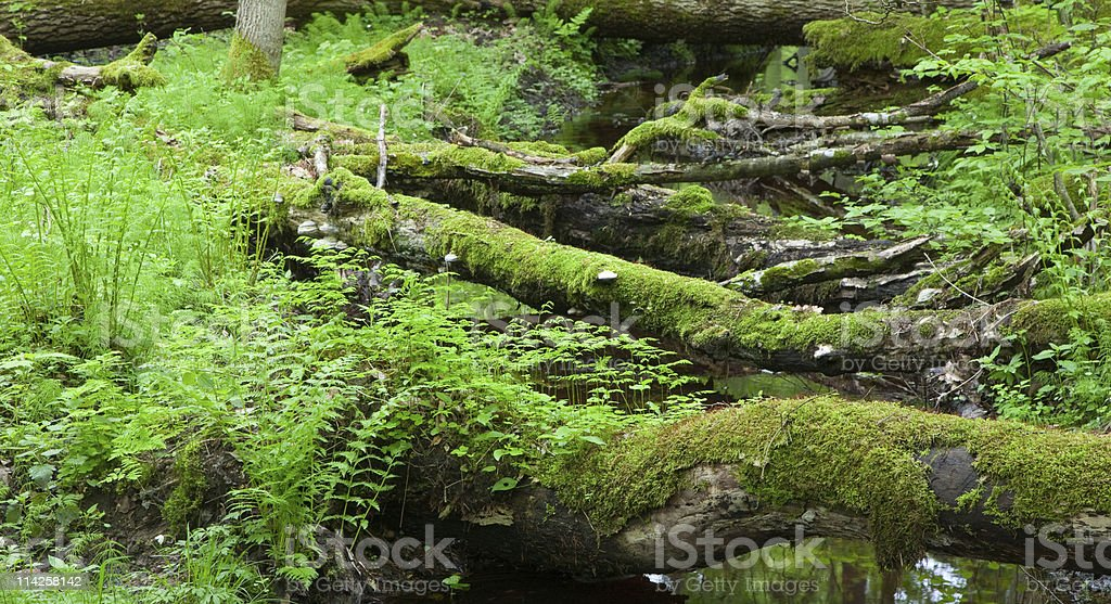 Springtime view of natural deciduous stand with little river stock photo