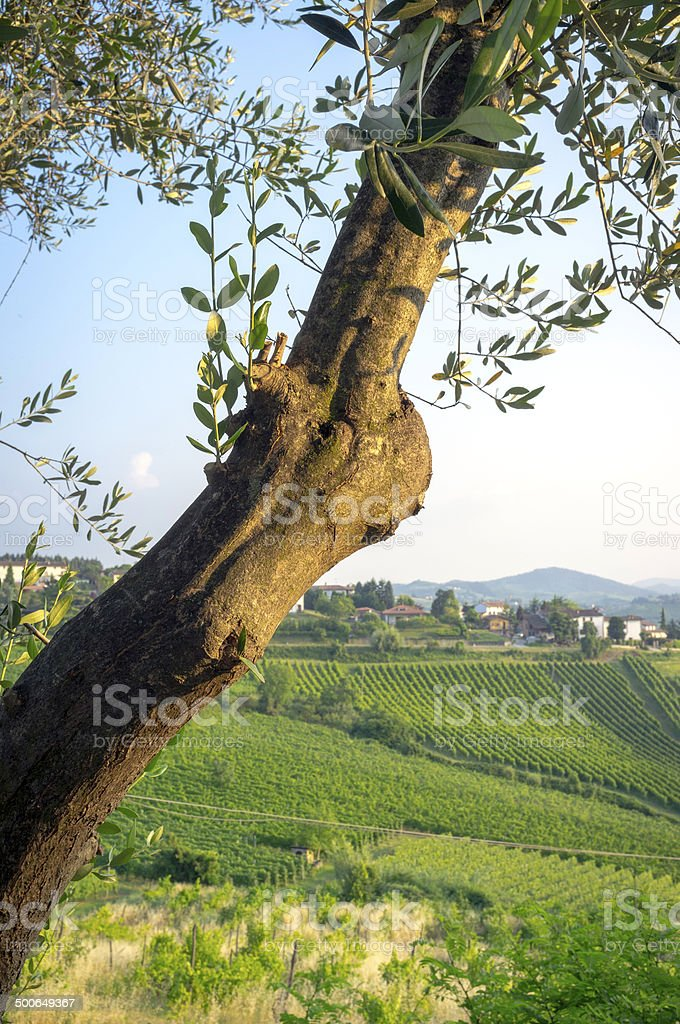 Springtime vineyards panorama. Color image stock photo
