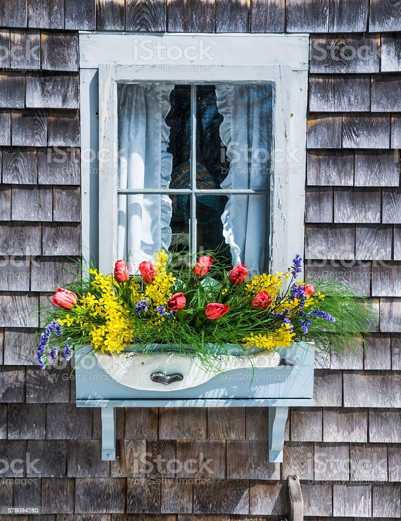 Springtime Window Box stock photo