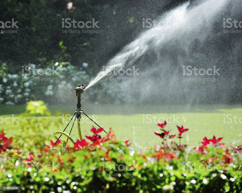 Sprinkler at work, flowers close up stock photo