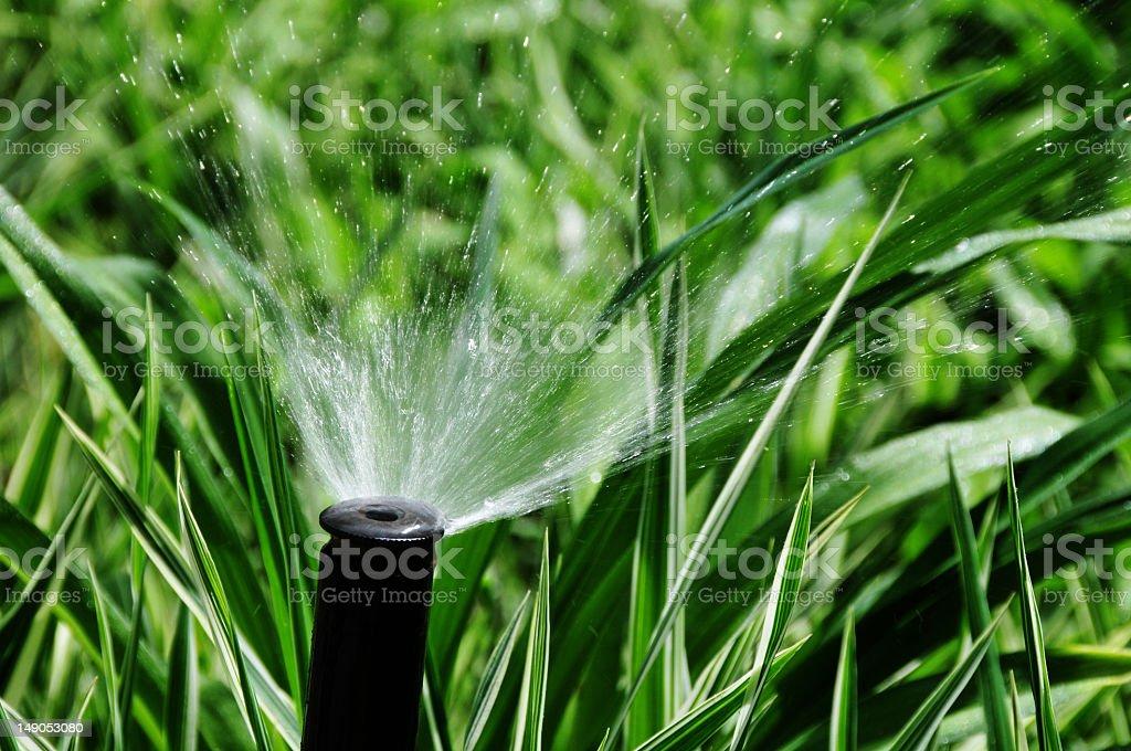 Sprinkler Head Closeup stock photo