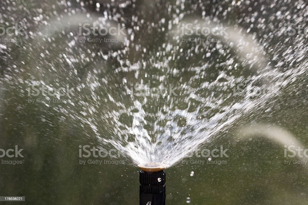 sprinkler head watering the flowers and grass stock photo