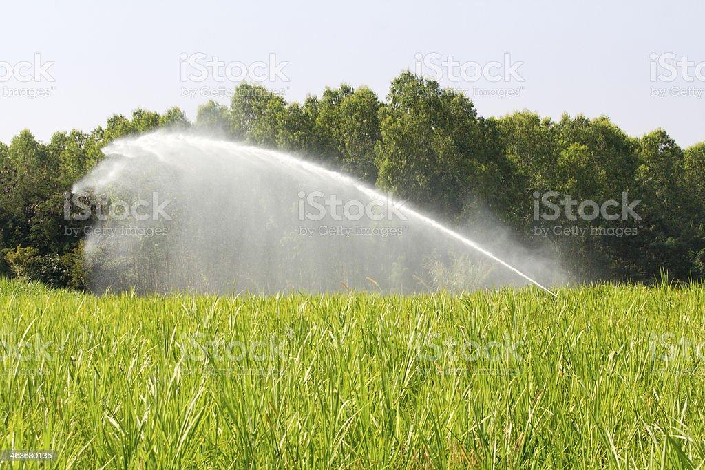 sprinkler head watering the grass in farm stock photo