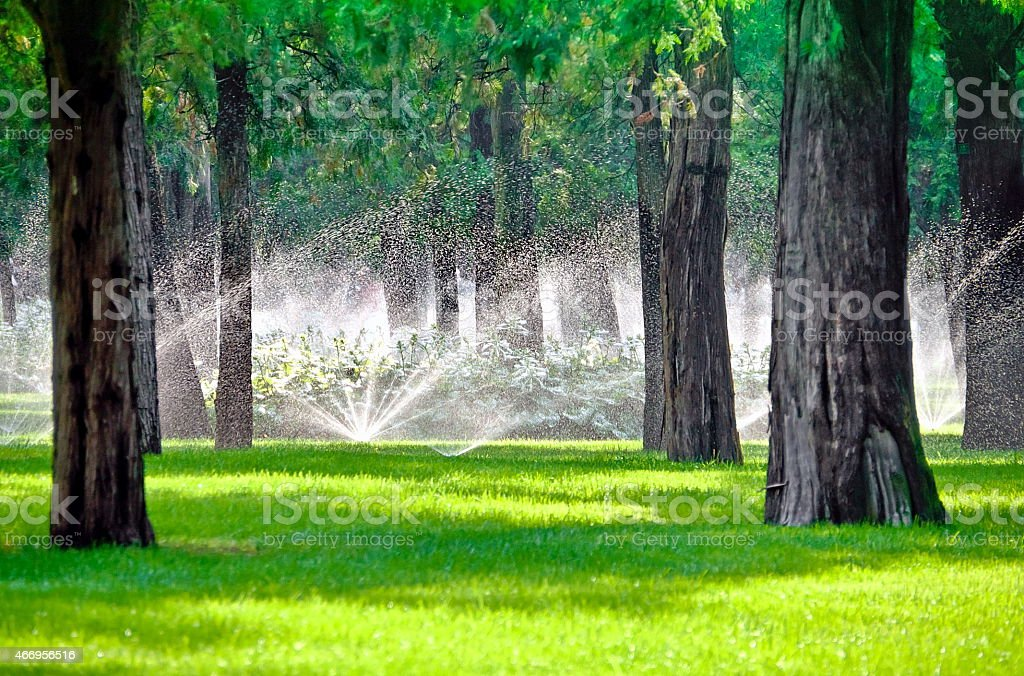 Sprinkler in a lawn with tree stock photo