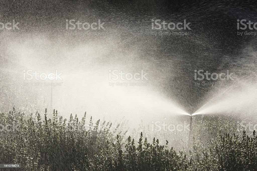 Sprinkler Irrigation Spray Agricultural Garden royalty-free stock photo