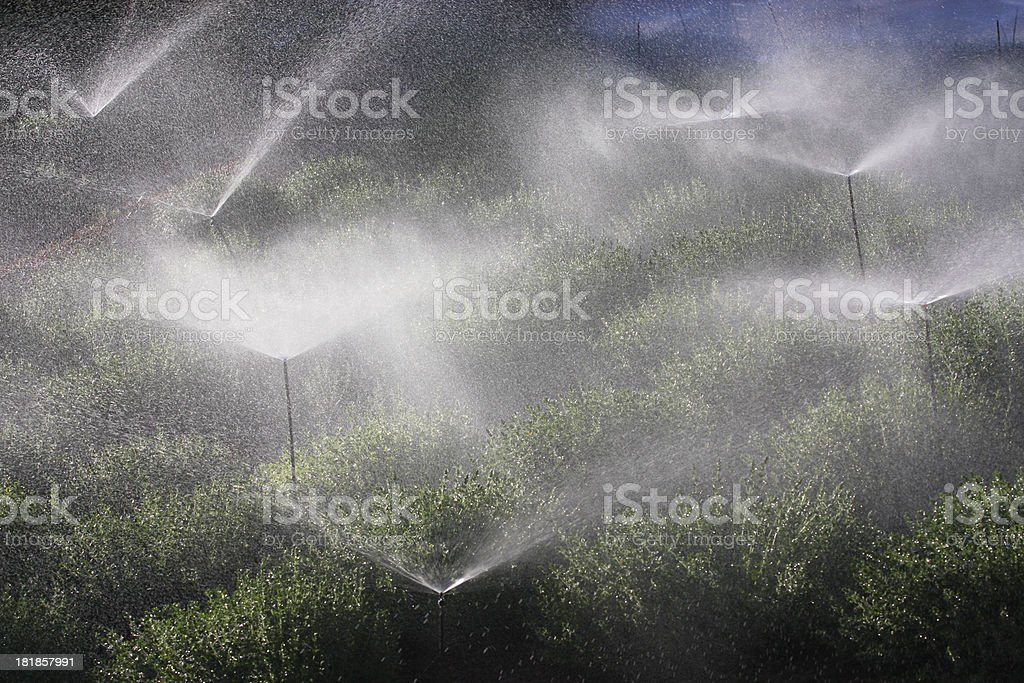 Garden Sprinkler Irrigation Faucet Spray stock photo