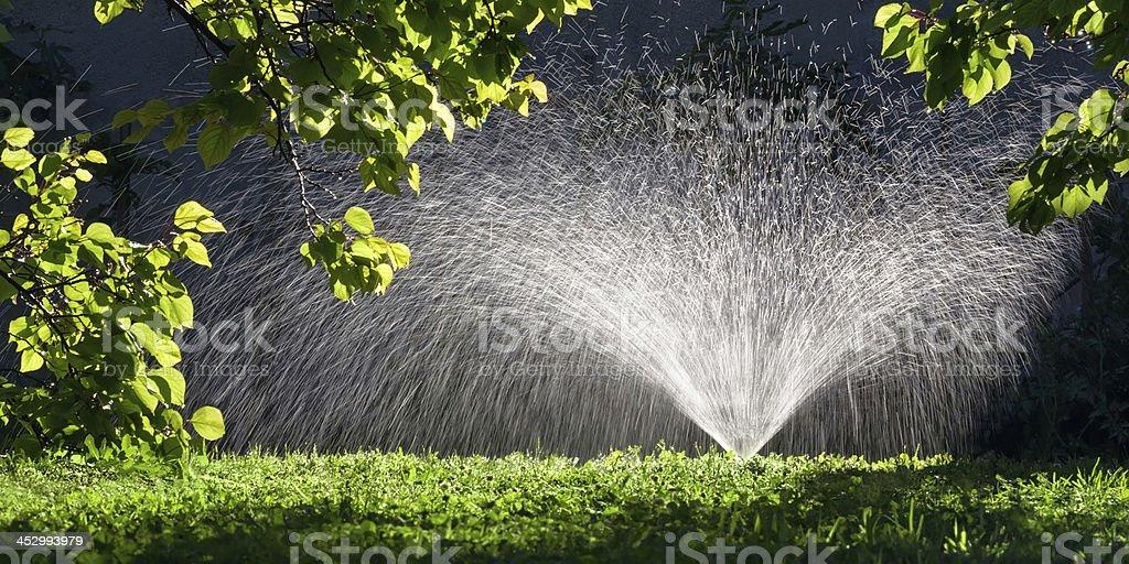 Sprinkler spraying water in Garden stock photo