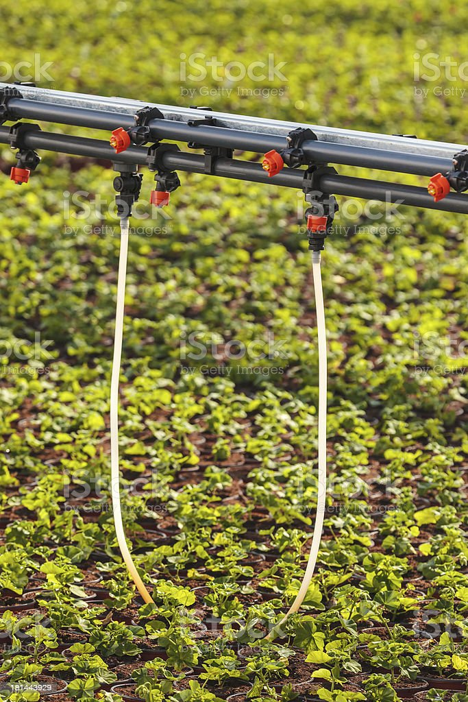 Sprinkler system inside a greenhouse irrigating plants royalty-free stock photo