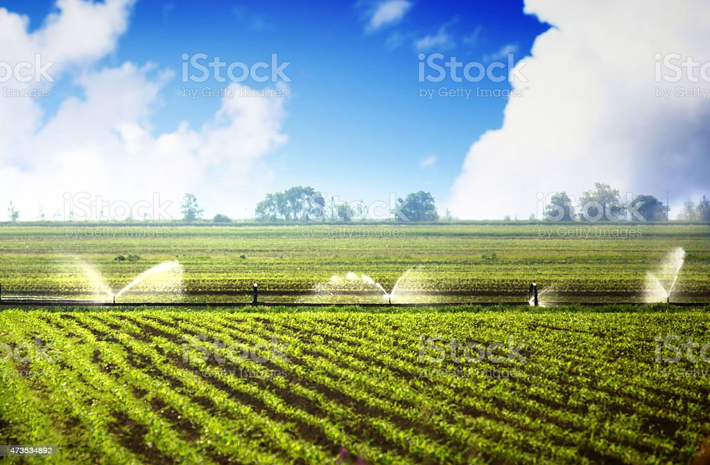Sprinkler system over soybean crop. stock photo