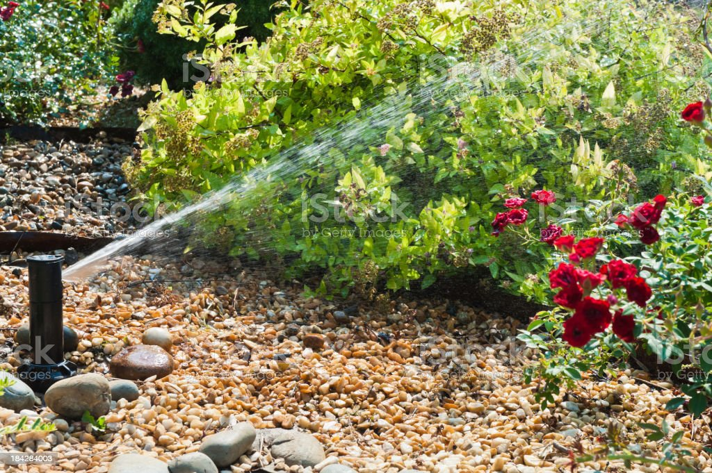 A sprinkler that is watering the plants during the day  stock photo