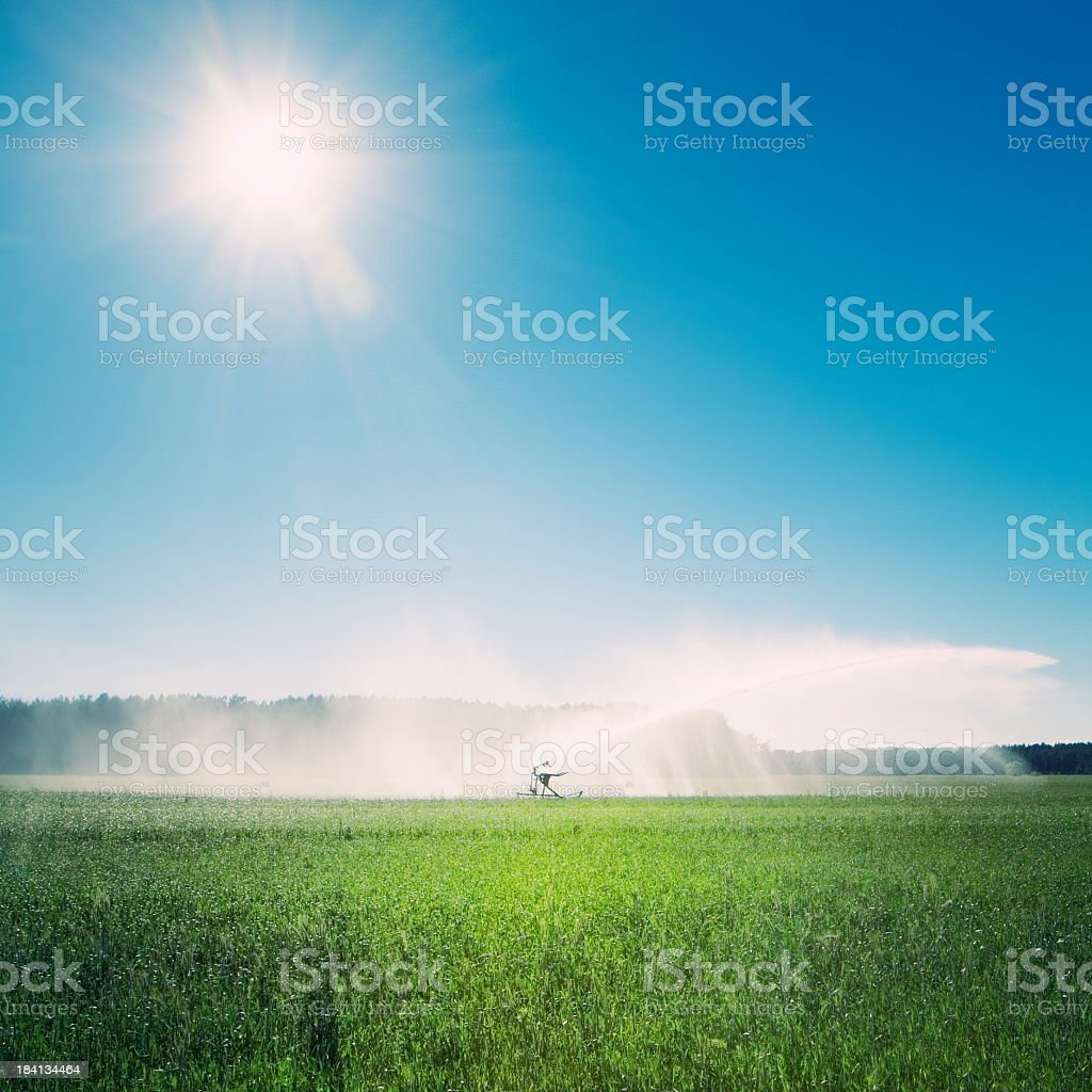 Sprinkler watering agricultural field in the sun stock photo
