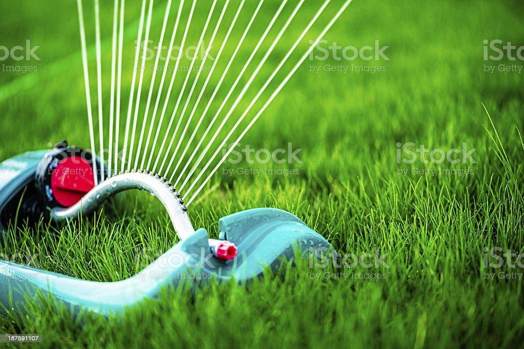 Sprinkler Watering Brand New Lawn stock photo
