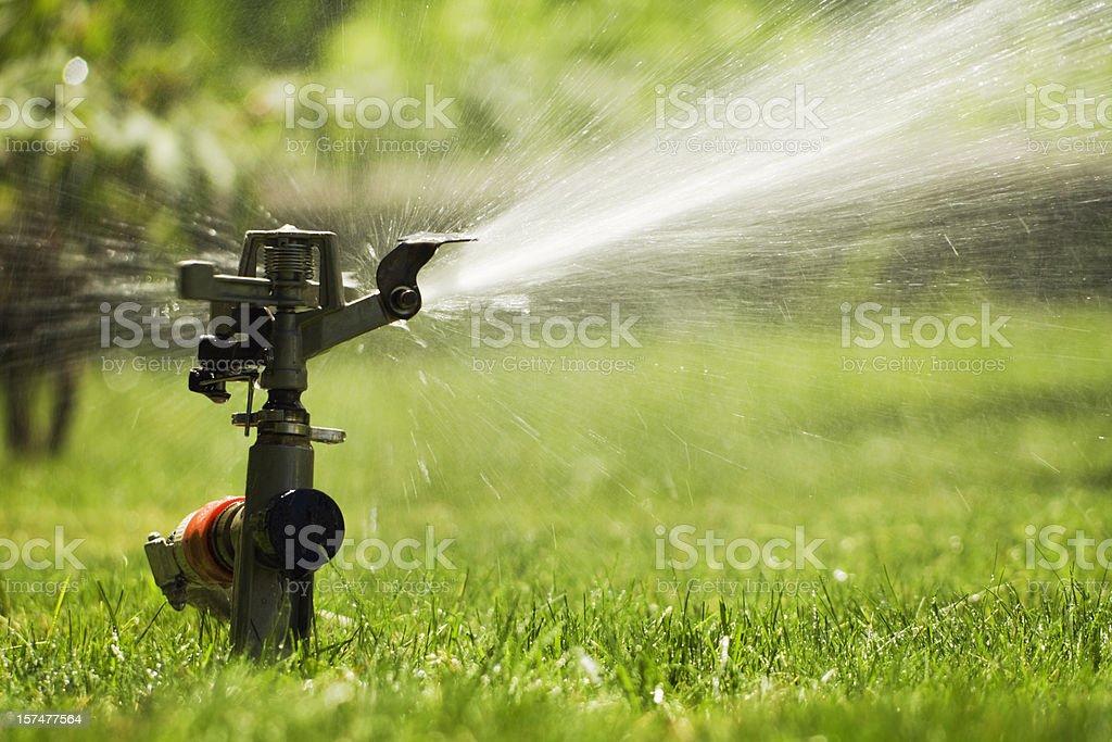 Sprinkler Watering Grass Lawn, Summer Irrigation Equipment for Spraying Yard stock photo