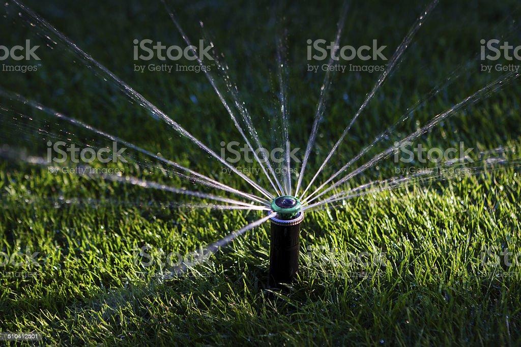 Sprinkler watering grass stock photo