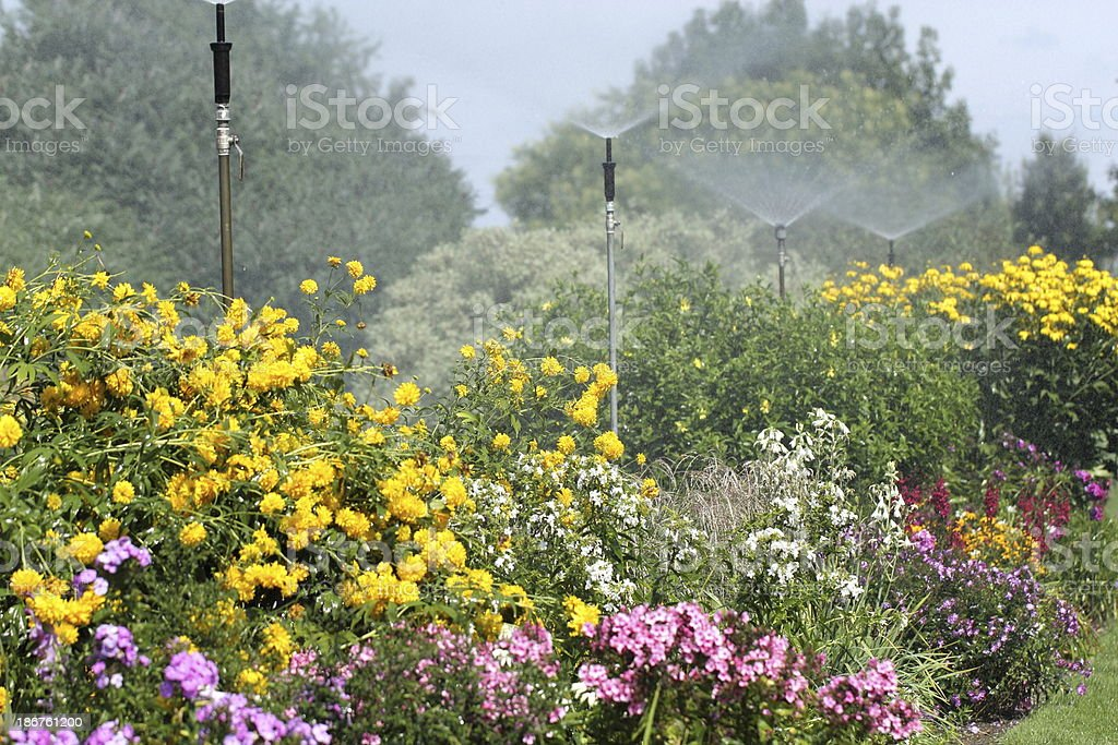 Sprinkler watering in a flower garden stock photo